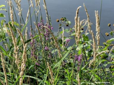 180-Bank-of-Flowers-Roaring-Dam-2-MAR-082617_035