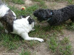180-Duke-Gibbs-Outside-dogs-083117_016