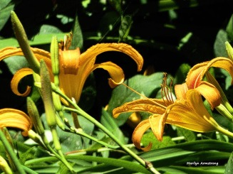 180-Lily-Textures-July-2-070217_045