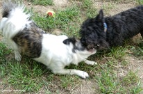 180-Outside-dogs-083117_001