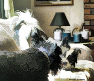 300-bonnie-duke-flying-dogs-081117_021