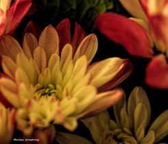 300-bouquet-august-080317_003