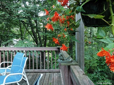 300-deck-with-begonias-080117_040