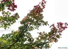 180-Branches-Riverside-RI-Mar-091517_022