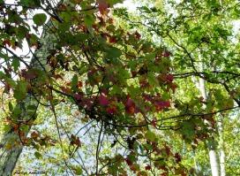 180-Branches-Riverside-RI-Mar-091517_077