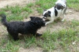 180-Outside-dogs-new-083117_012