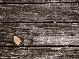300-bw-yellow-leaf-deck-textures-090717_004