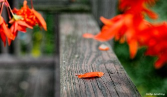 One orange petal
