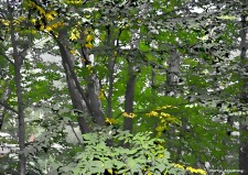 300-paint-september-early-autumn-090717_005