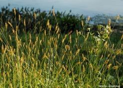 300-reeds-river-bend-mar-092317_098