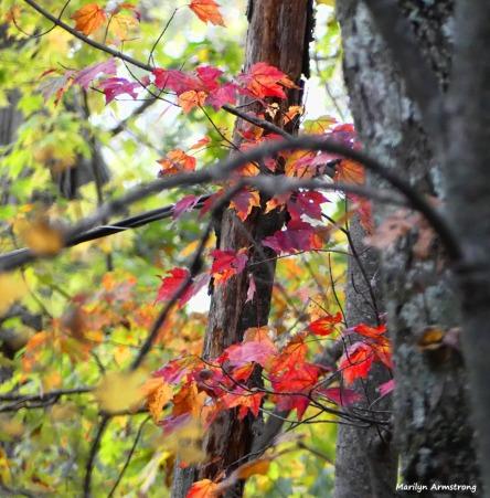 180-Late-Foliage-Home-FZ-10232017-009