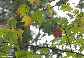 180-Maple-Tree-2-Farm-Mar-100517_074