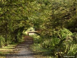 180-Path-Canal-Fall-Ma-10122017_108