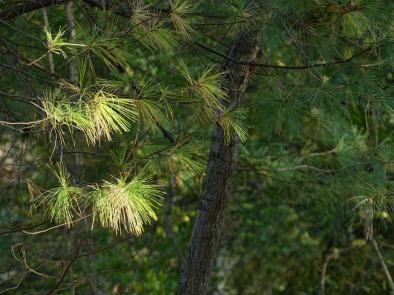 180-Pine-Canal-Fall-Ma-10122017_106