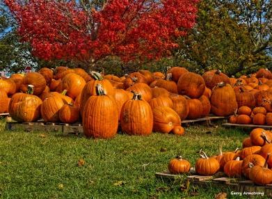 180-Pumpkins-Cape-Cod-GAR-10172013_031