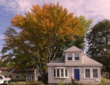 Little house and big maple tree