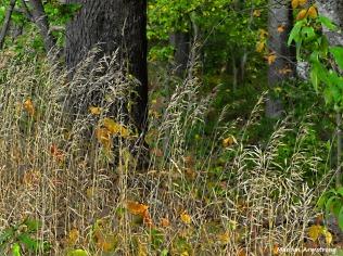 180-Reeds-Farm-Mar-100517_113