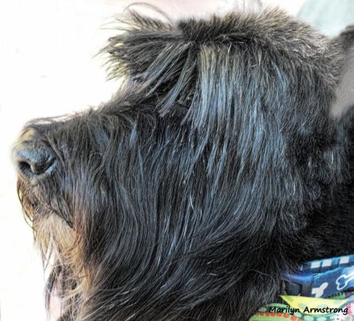 00-bonnie-groomed-101217_010