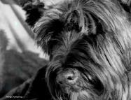 300-bw-bonnie-groomed-101217_007