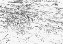 300-bw-line-drawing-leaves-on-deck-foliage-3-oly-101017_090