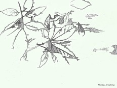 300-bw-line-drawing-leaves-on-deck-foliage-3-oly-101017_091