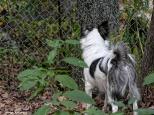 300-Duke-Fence-Late-Foliage-Home-2-10232017_026
