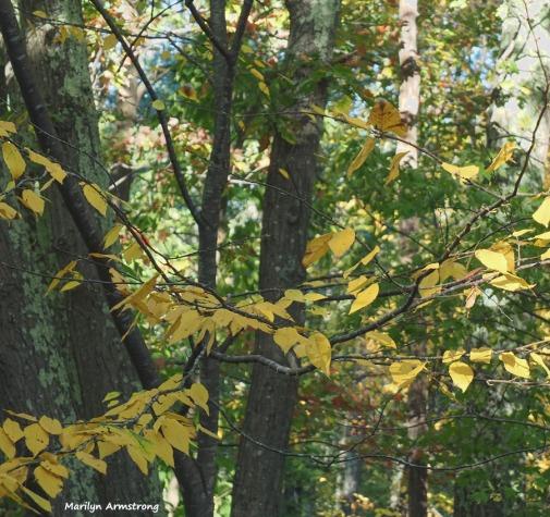 300-foliage-3-oly-101017_051