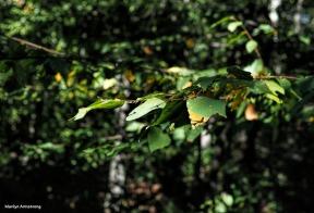 300-foliage-deck-1-100117_031