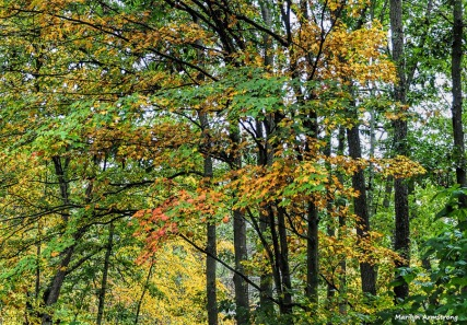 300-foliage-in-rain-2-oly-ma-100917_018