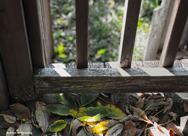 300-gate-leaves-on-deck-1-100117_07