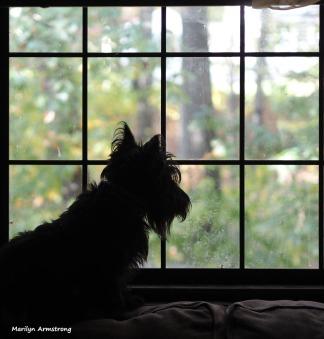 300-gibbs-window-10212017_002