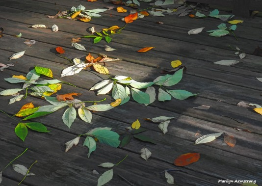 300-graphic-leaves-on-deck-foliage-3-oly-101017_089