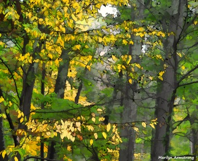 300-graphic-yellow-branches-morning-october-oly-ma-100817_046