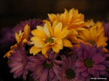 300-halloween-flowers-oly-10262017_007