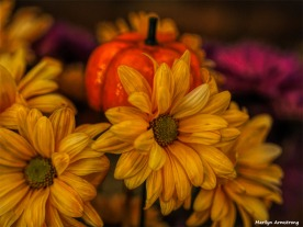 300-halloween-flowers-oly-10262017_009