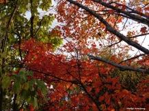 300-Late-Foliage-Sony-10232017_006