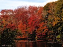 The Mumford River -- full foliage!