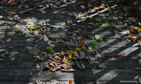 300-leaves-on-deck-1-100117_08