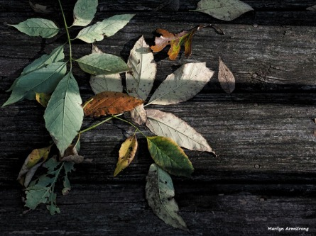 Leaves on the deck