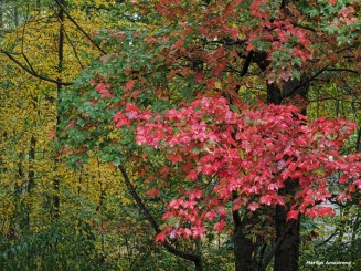 300-red-foliage-in-rain-oly-ma-100917_027
