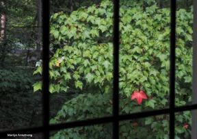 300-red-leaf-1-092717_076