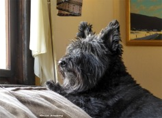 180-Bonnie-Late-Nov-Dogs11212017_015