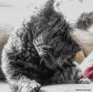 180-Bonnie-Late-Nov-Dogs11212017_019