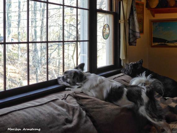 180-Duke-Gibbs-Late-Nov-Dogs11212017_055