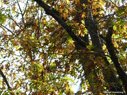 180-Golden-Leaves-November-Deck-11032017_014