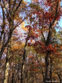 180-Last-Foliage-November-Woods-11082017_04