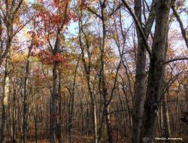 180-Last-Leaves-2-November-Woods-11082017_06