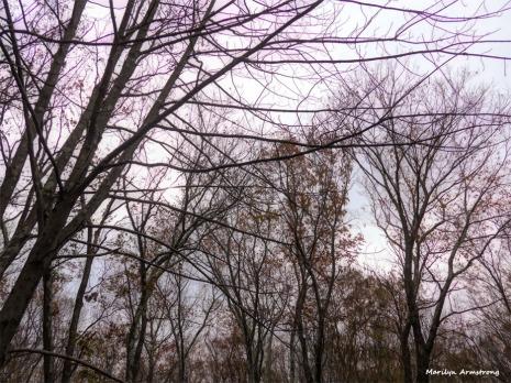 180-Mid-November-Gray-Day-11182017_02
