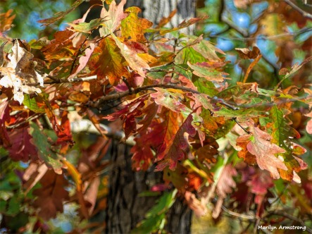 180-Oak-Leaves-November-Deck-11032017_025
