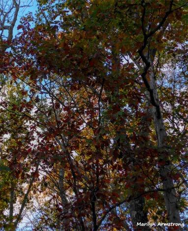 180-Woods-in-Evening-11022017_01